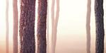 Textures d'écorce et timelapse gratuits