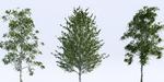 VizPeople : 18 arbres 3D gratuits pour 3ds Max et V-Ray