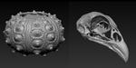 Forme It, une boutique de scans 3D