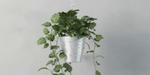 Modéliser une plante réaliste sous 3ds Max