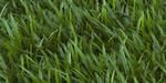 Créer de l'herbe pour V-Ray pour SketchUp