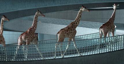 Cube Creative - Girafe